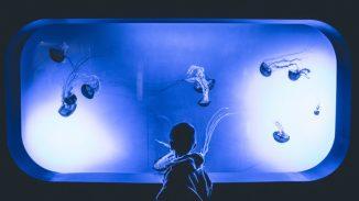 animal-aquarium-boy-792643