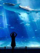 animals-aquarium-fish-889848